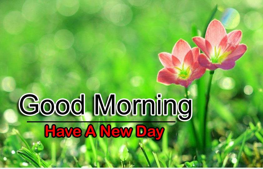 Free Best Flower 4k Good Morning Wallpaper