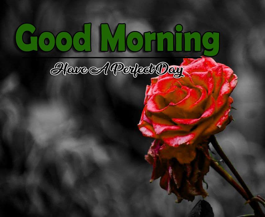Free Flower 4k Good Morning Pics Download