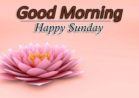 Free Flower 4k Good Morning Pics Images