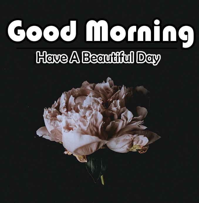Free Flower 4k Good Morning Pics Wallpaper Download