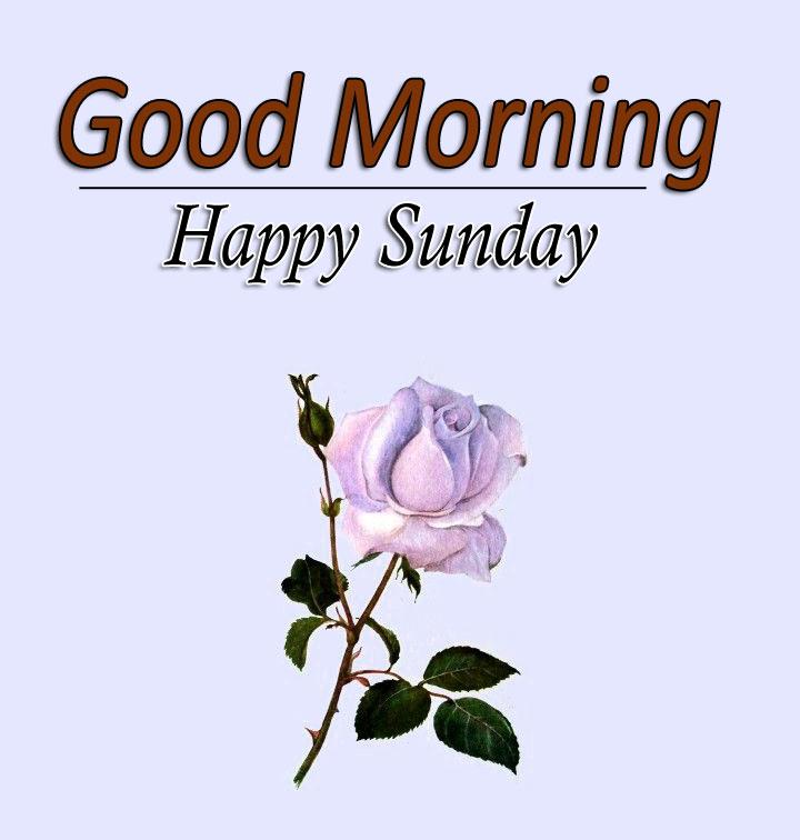 Free Flower 4k Good Morning Wallpaper Free Download