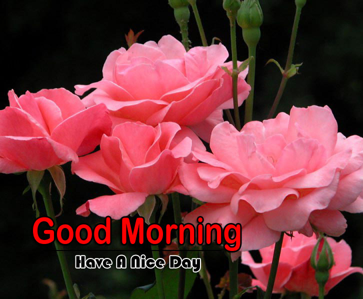 Free Flower 4k Good Morning Wallpaper Free