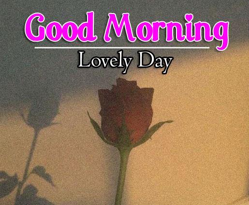 Free Full HD Flower 4k Good Morning Images