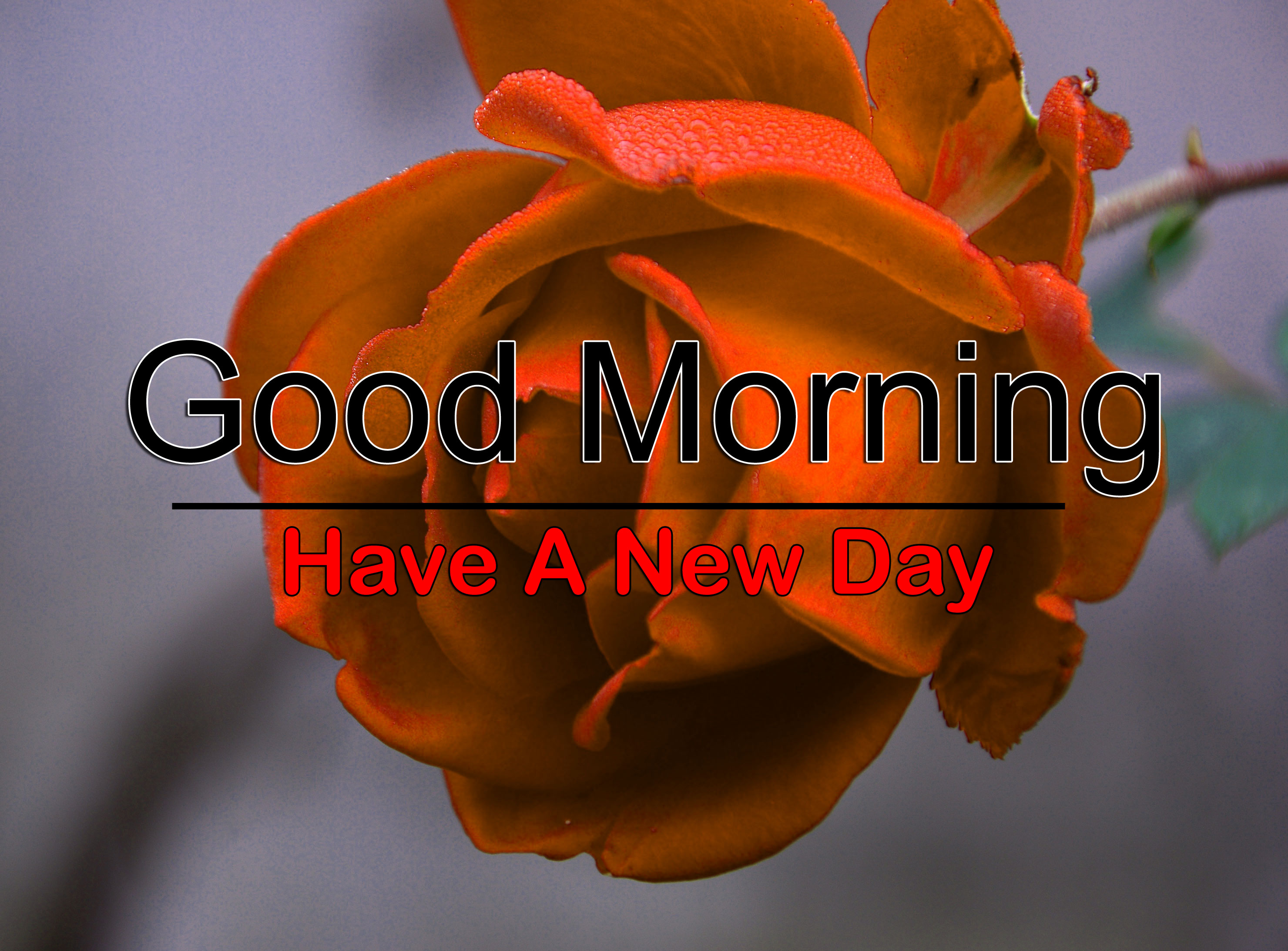 Free Good Morning Wallpaper Free Download