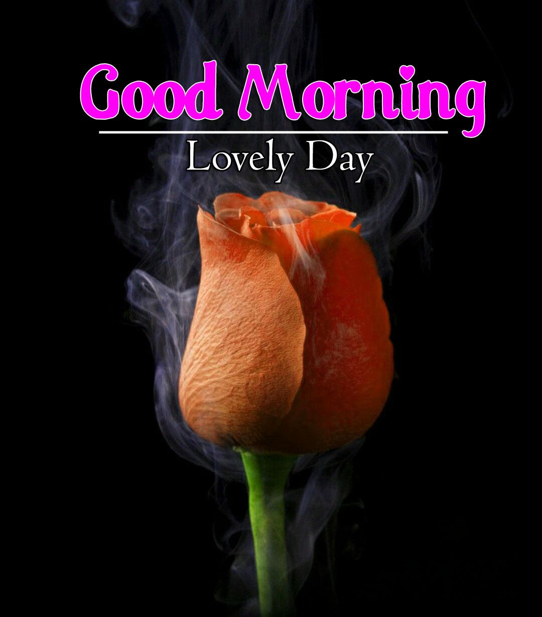 Free New Best Flower 4k Good Morning Wallpaper Download