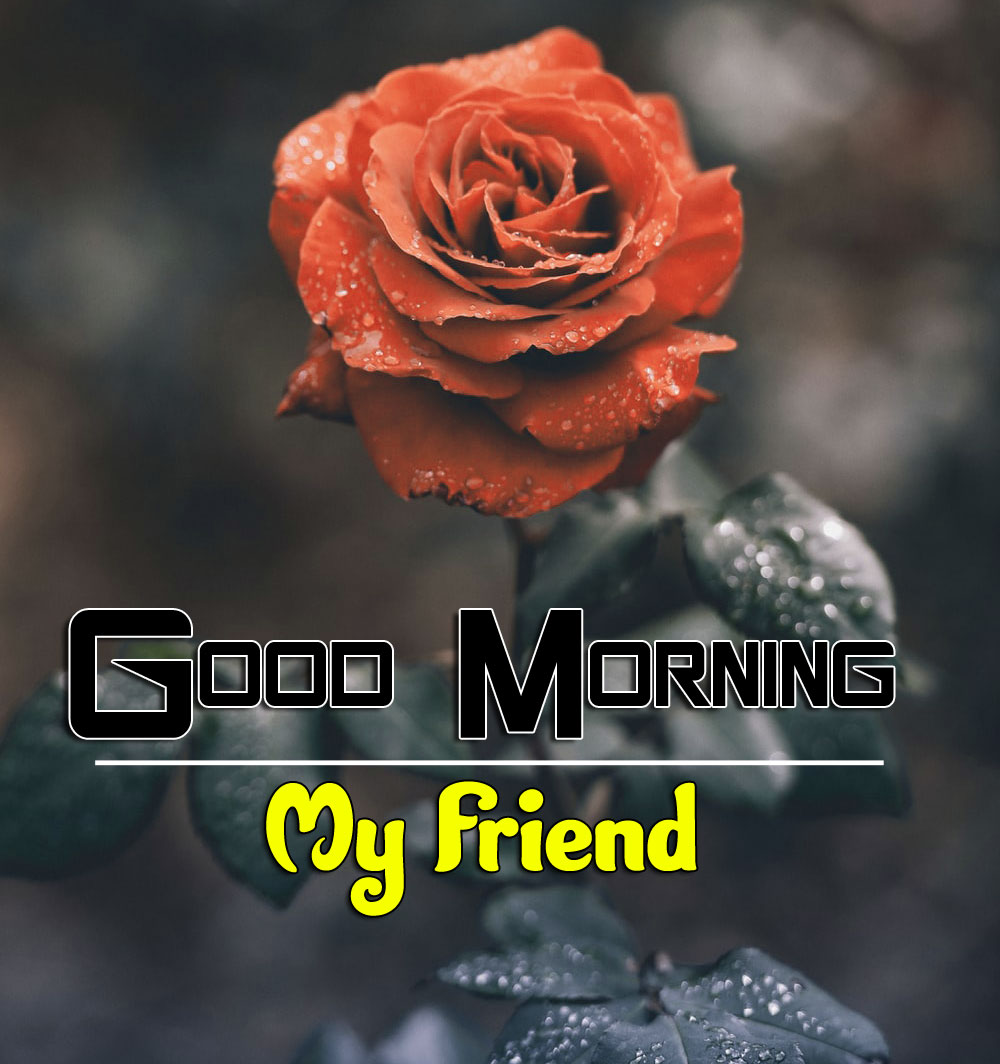 Free New Best Good Morning Wishes 4k Pics Download