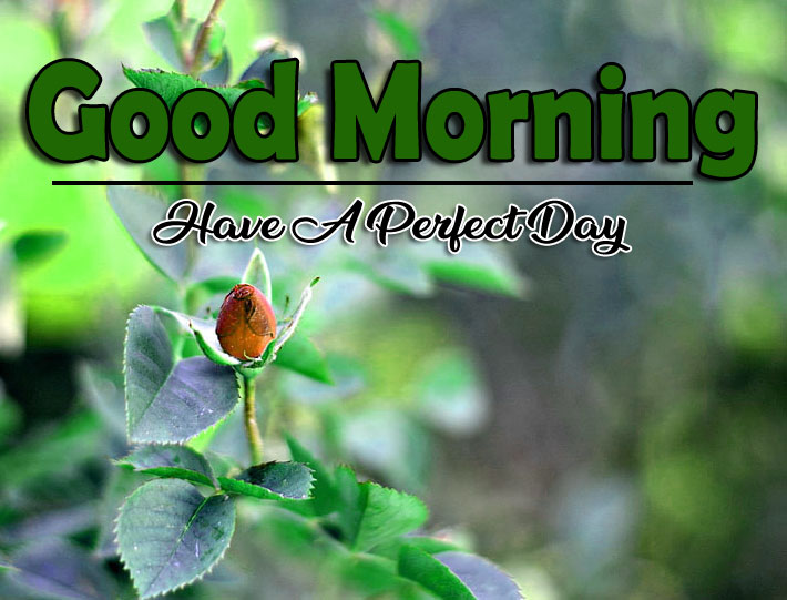 Free New Good Morning Wallpaper Download