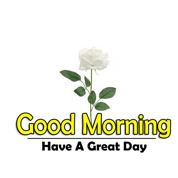 Free Top Flower 4k Good Morning Images Download