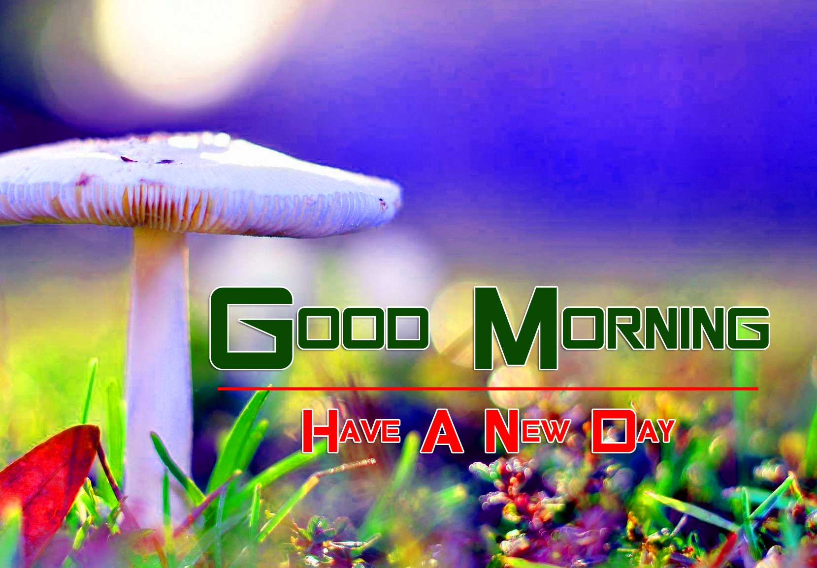 Free Top Quality Free Wonderful Good Morning 4k Pics images Download