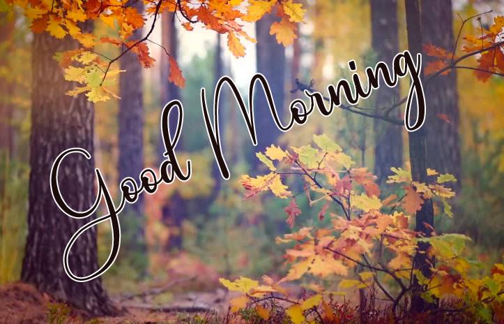 Good Morning Images Free 1