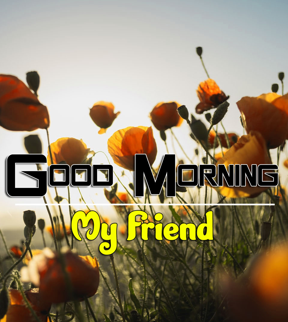 Good Morning Photo Download 1