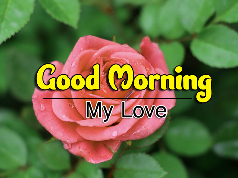 Good Morning Photo Download 3 1