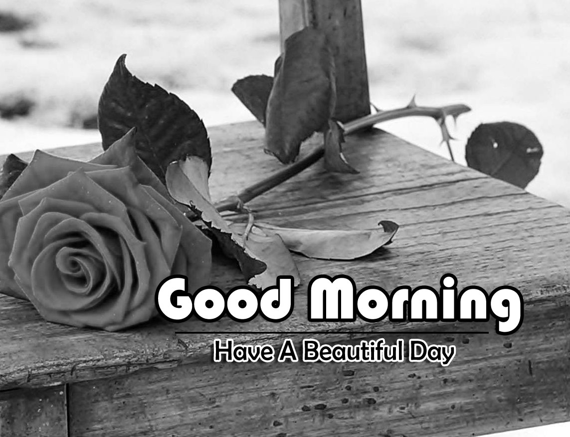 Good Morning Photo Download 3