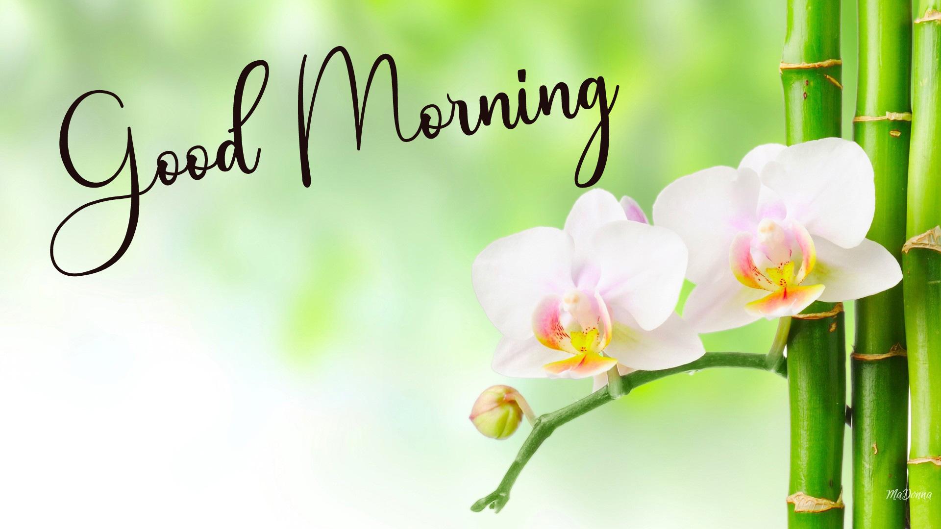 Good Morning Photo Free Download 1