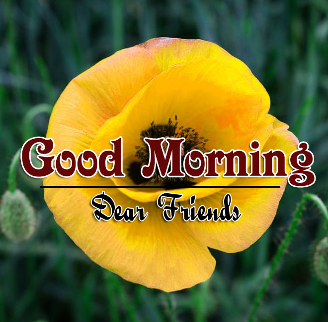 Good Morning Pics Download 1