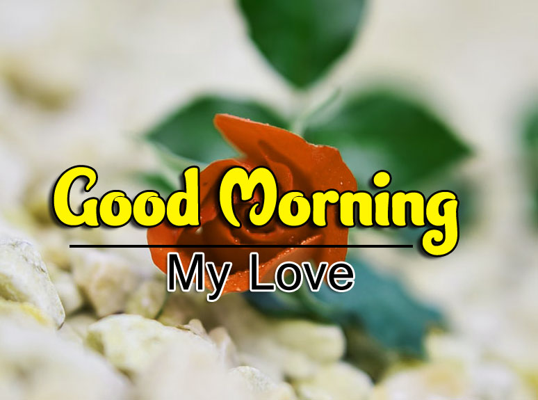 Good Morning Pics Free 1