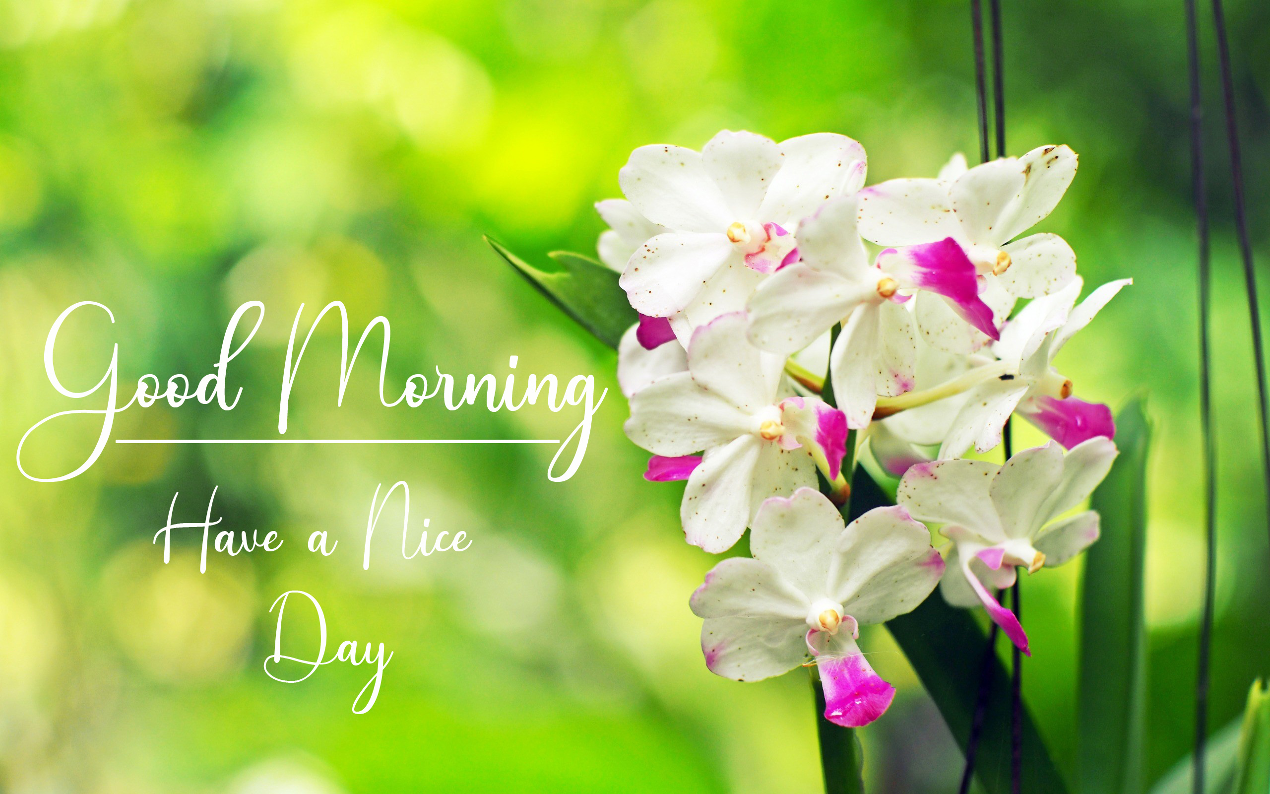 Good Morning Pics New Download 1