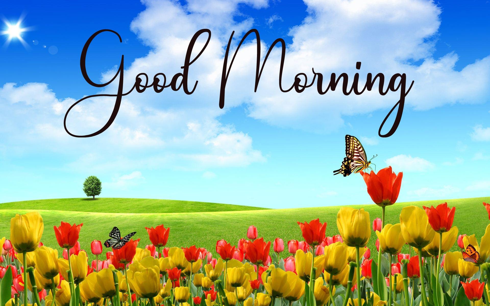 Good Morning Pics New Download 2 1