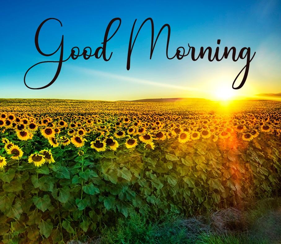 Good Morning Pics New Download 4