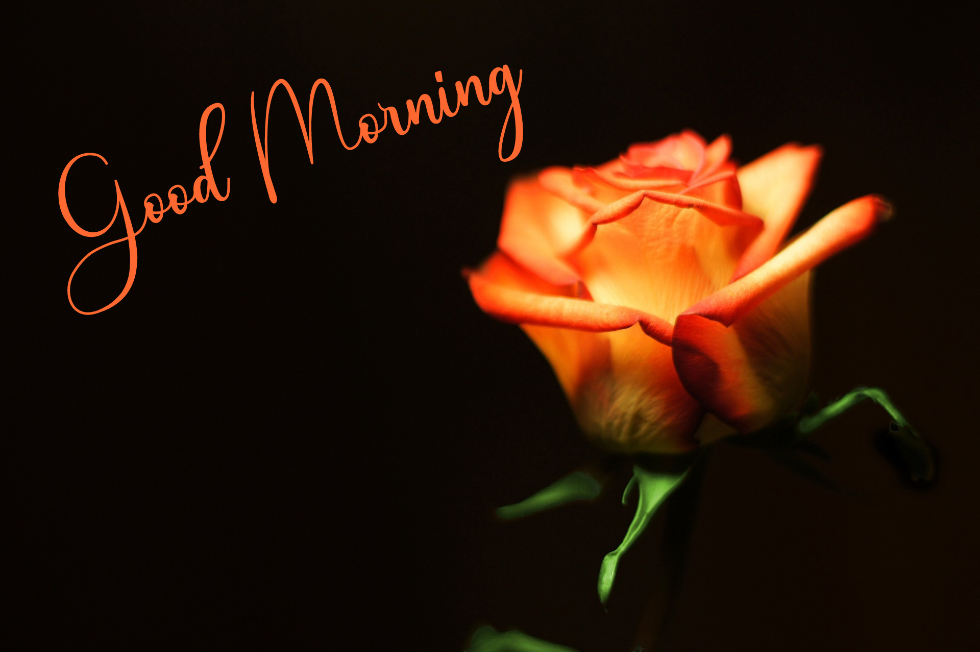 Good Morning Pics New Download 6