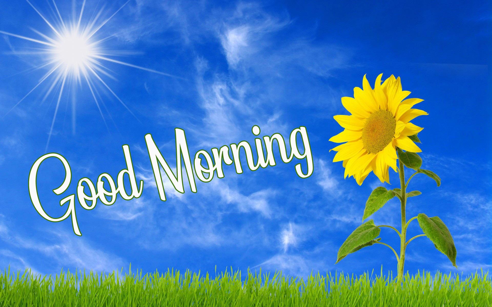 Good Morning Pics New Download Free
