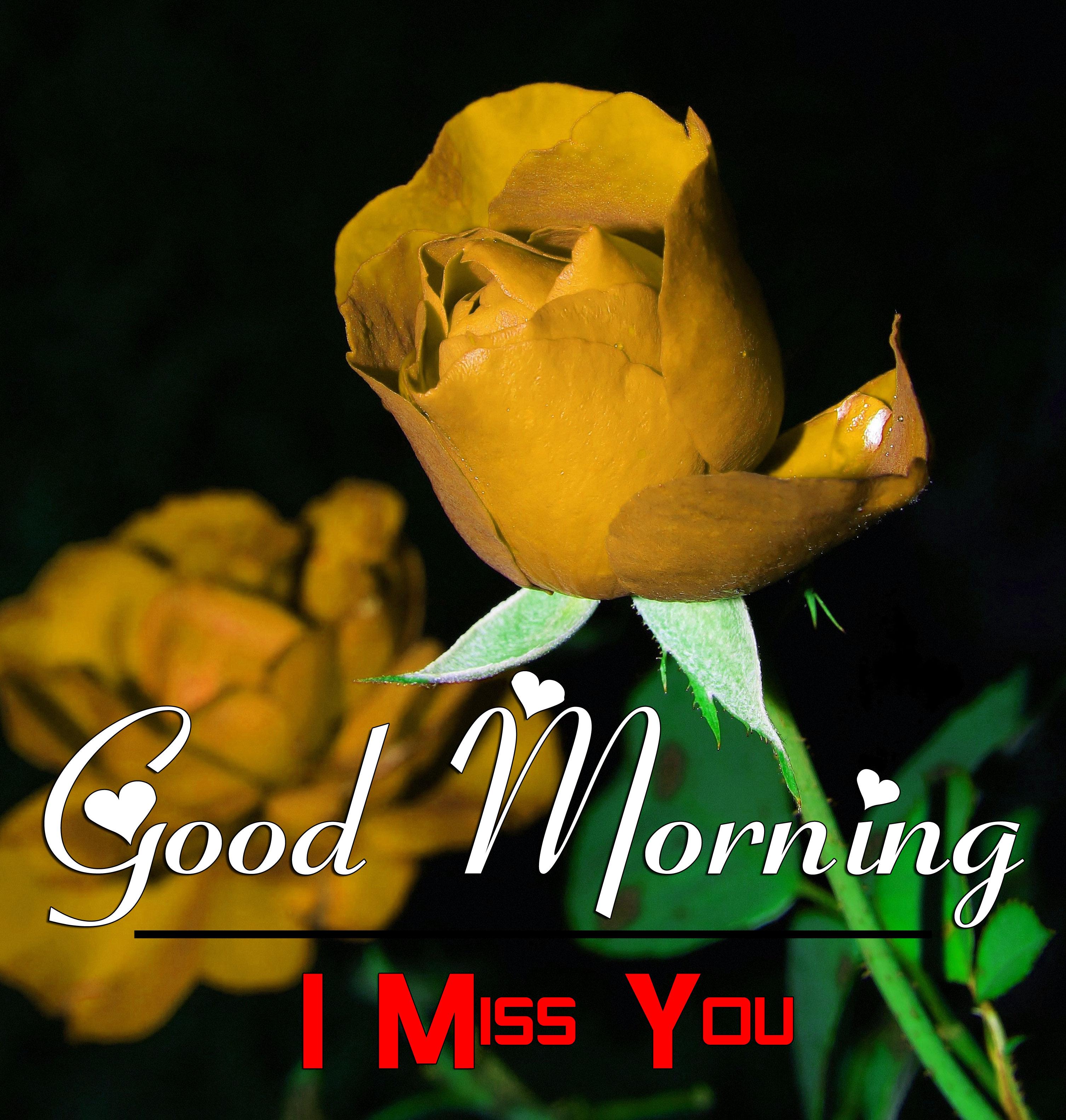 Good Morning Pics Wallpaper Download 1
