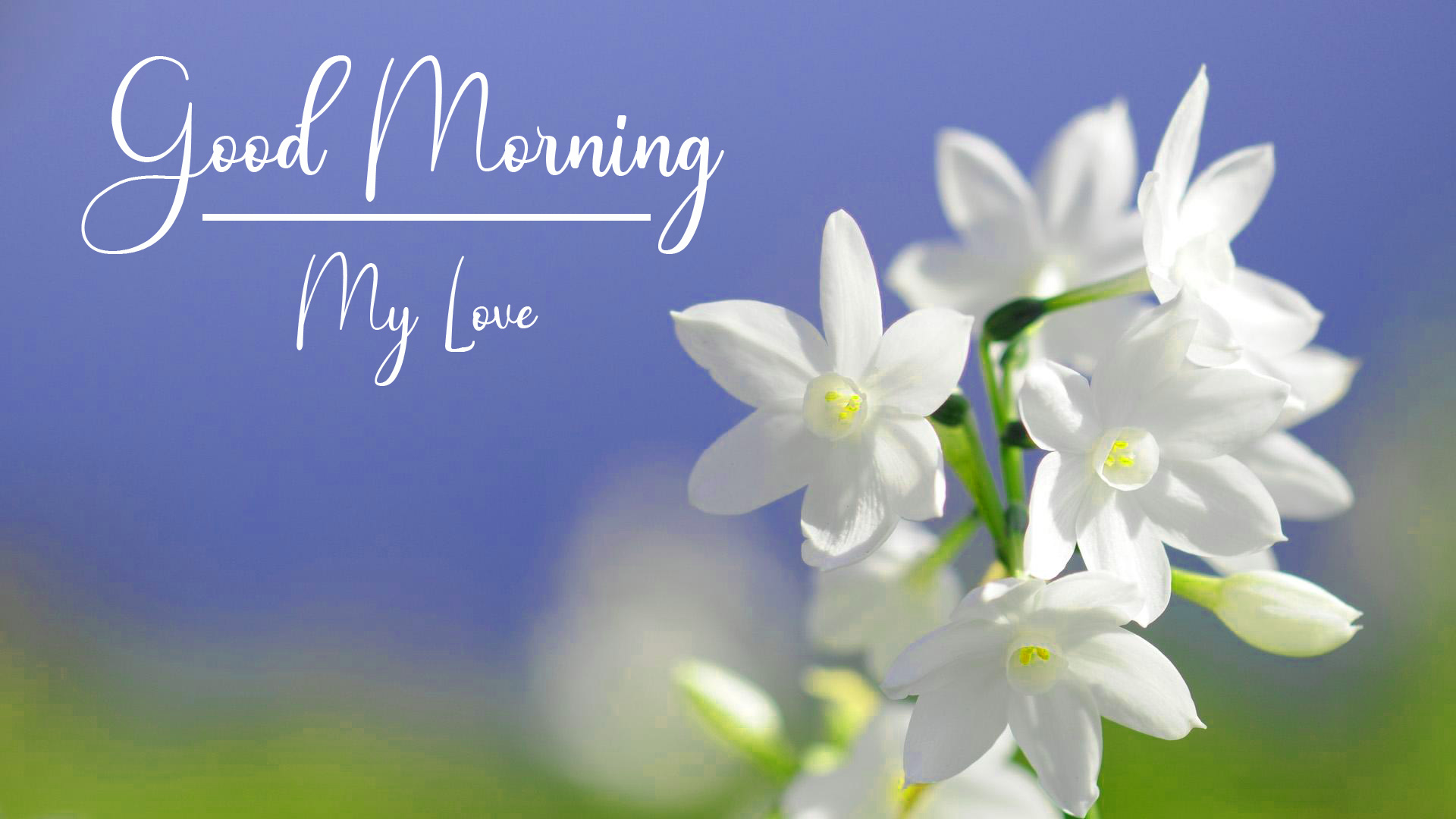 Good Morning Pics Wallpaper With Flower