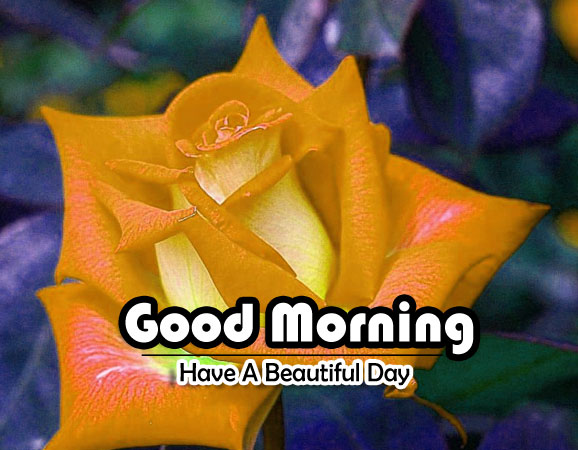 Good Morning Pictures New Download