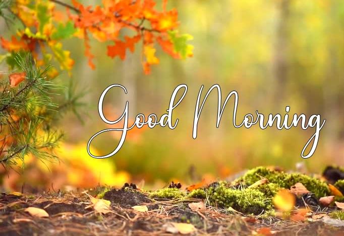 Good Morning Wallpaper Download 2 1