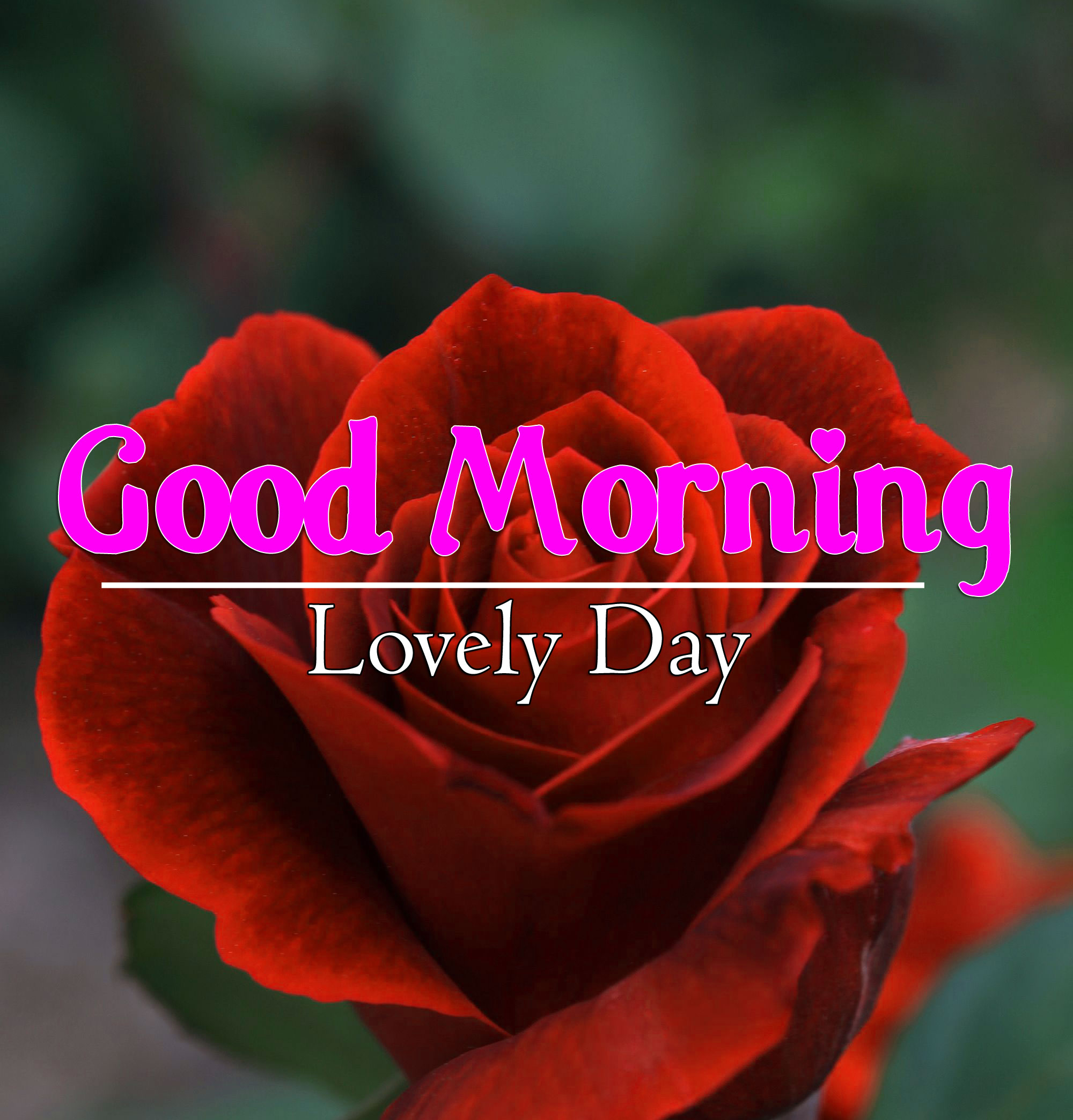 Good Morning Wallpaper Free Download