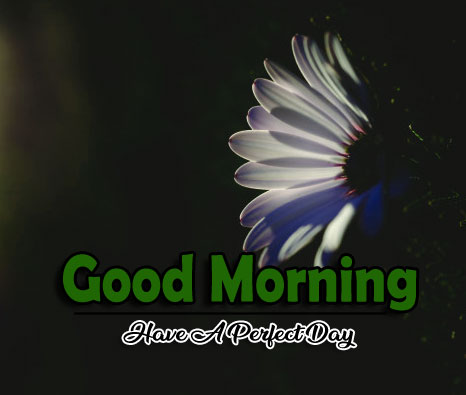 Good Morning Wallpaper New Download