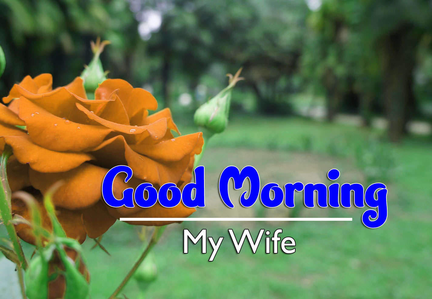 Good Morning Wishes 4k Wallpaper Free Download