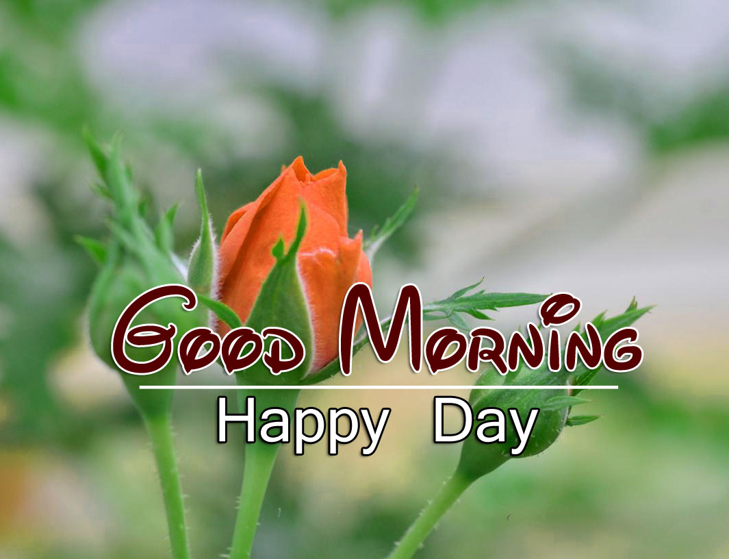 Good Morning Wishes 4k Wallpaper pics Download