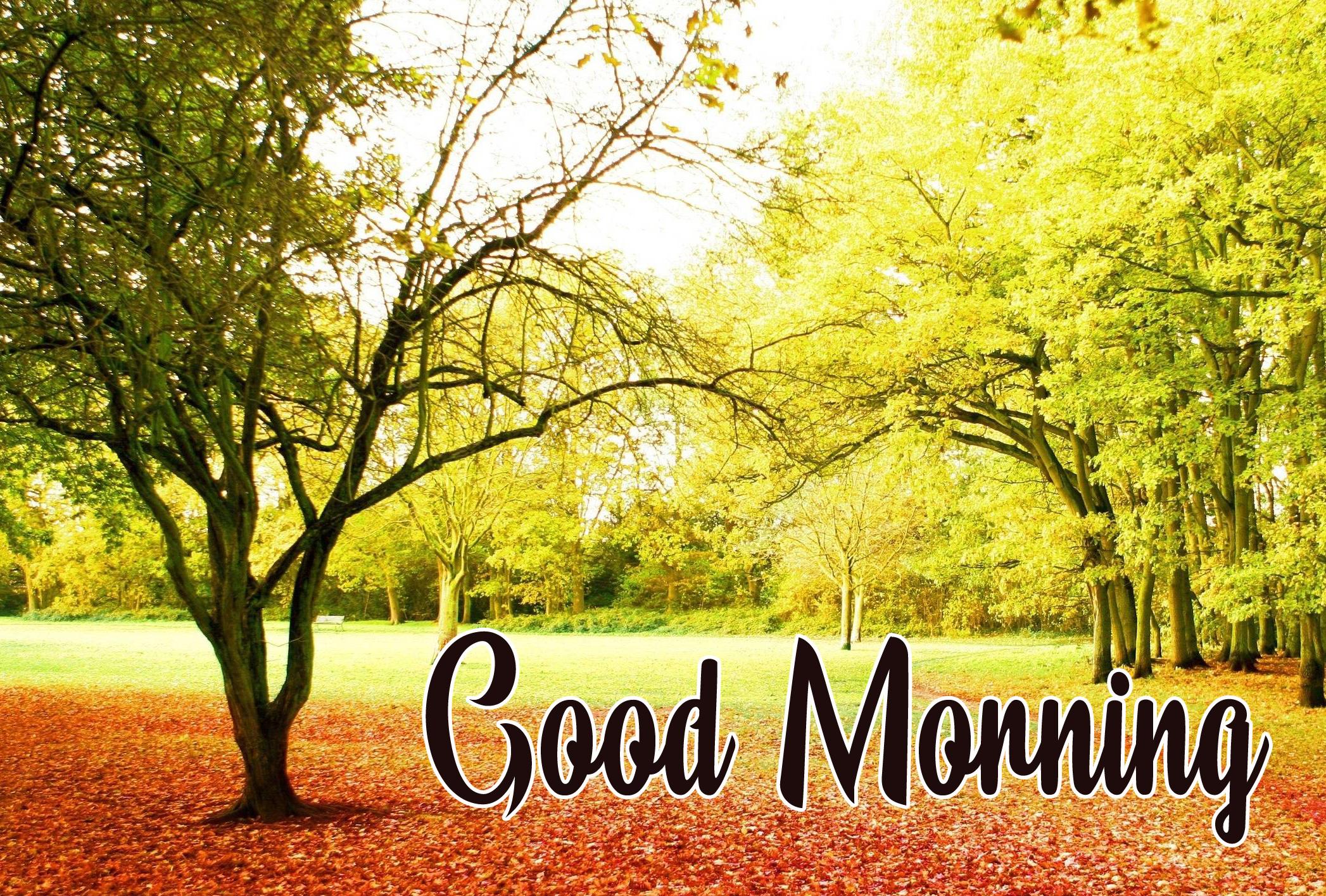 HD Nature Good Morning Pics Download