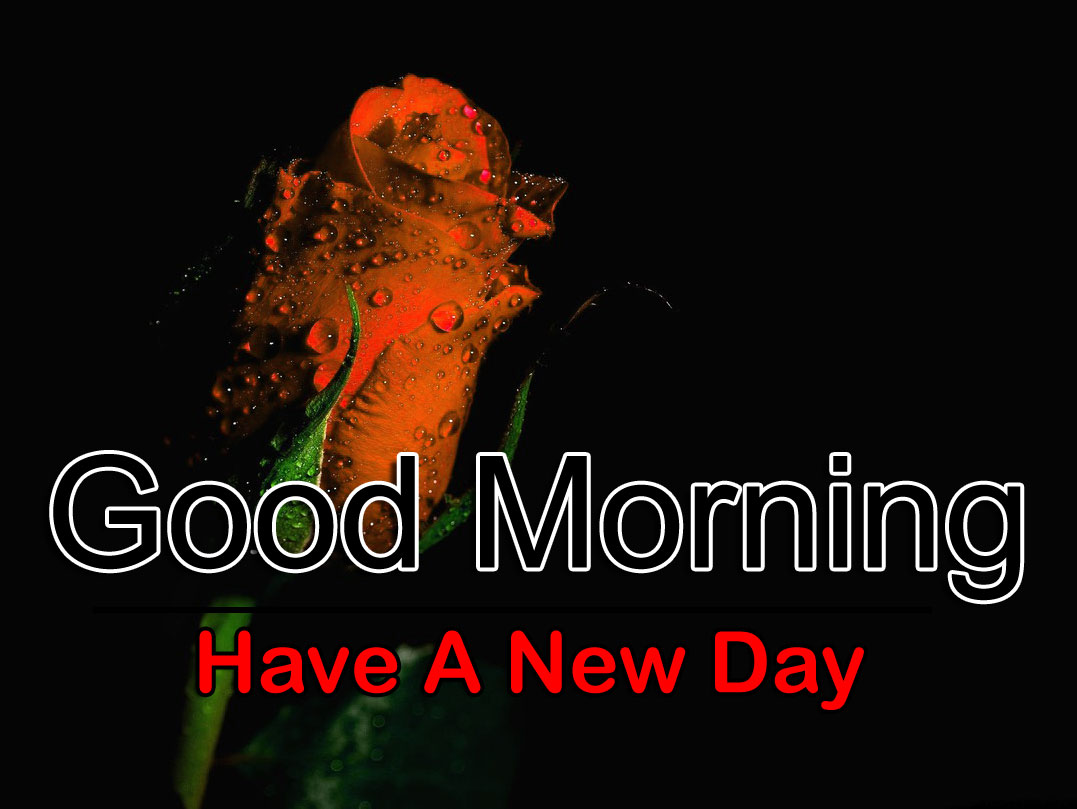 Latest Free Good Morning Images Download