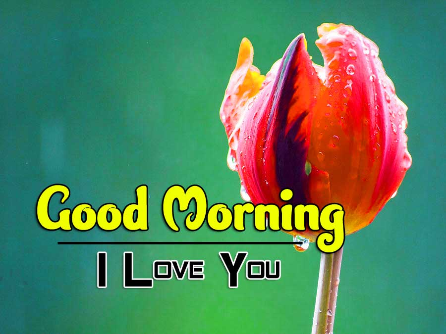 Latest Free Good Morning Wishes Pics Download