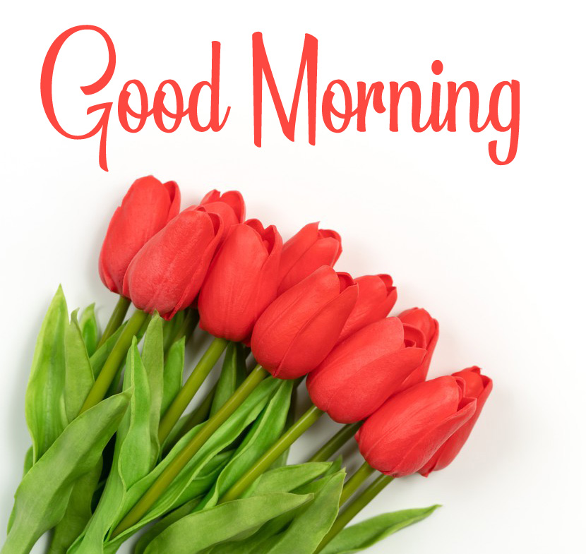 Latest New Good Morning Pics Download