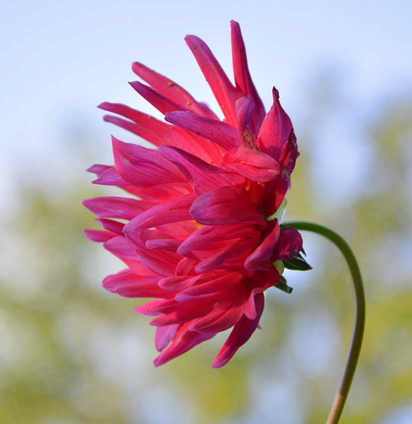 New  Flower For ProFile Photo Wallpaper