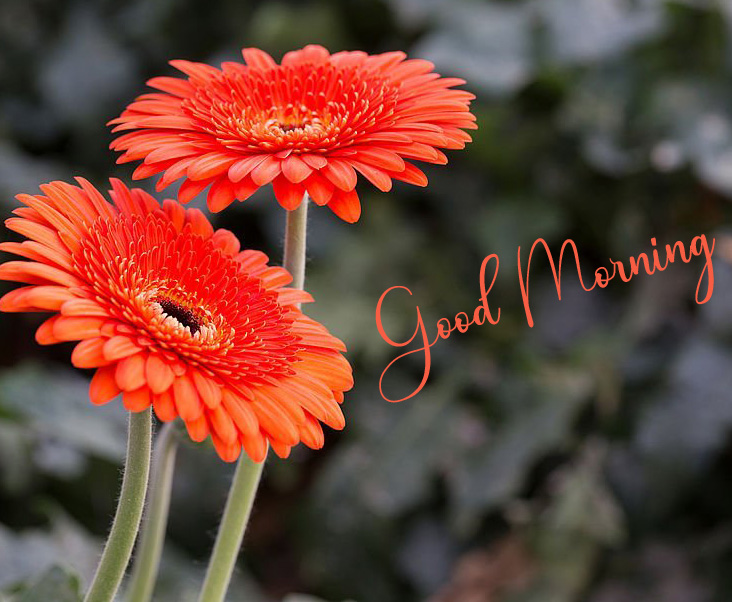 New Best Good Morning Pics Download 2
