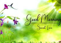 New Best Good Morning Pics Download