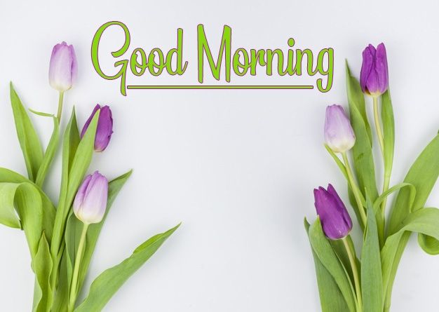 New Best Good Morning Pictures Free