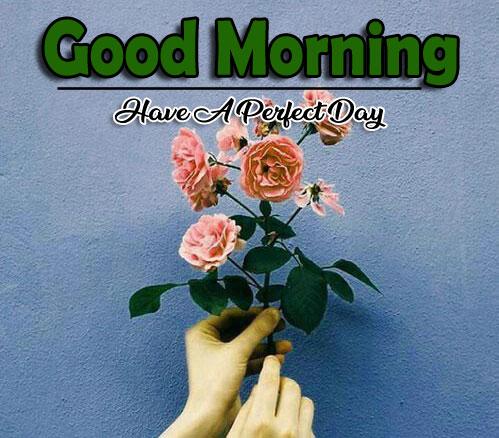 New Best Quality Flower 4k Good Morning Pics Wallpaper Fre
