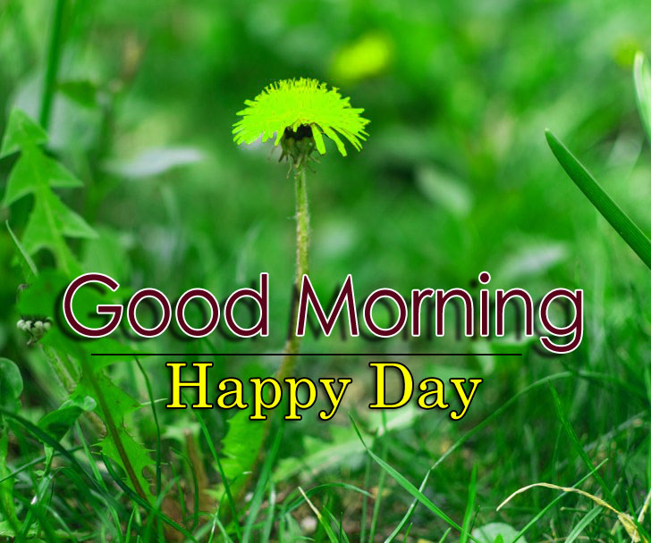 New Good Morning Images Download Free