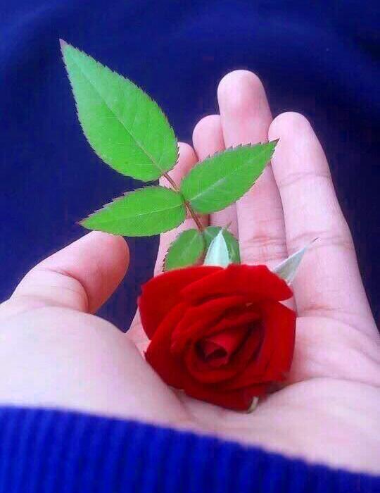 New Nature Whatsapp Dp Photo Free