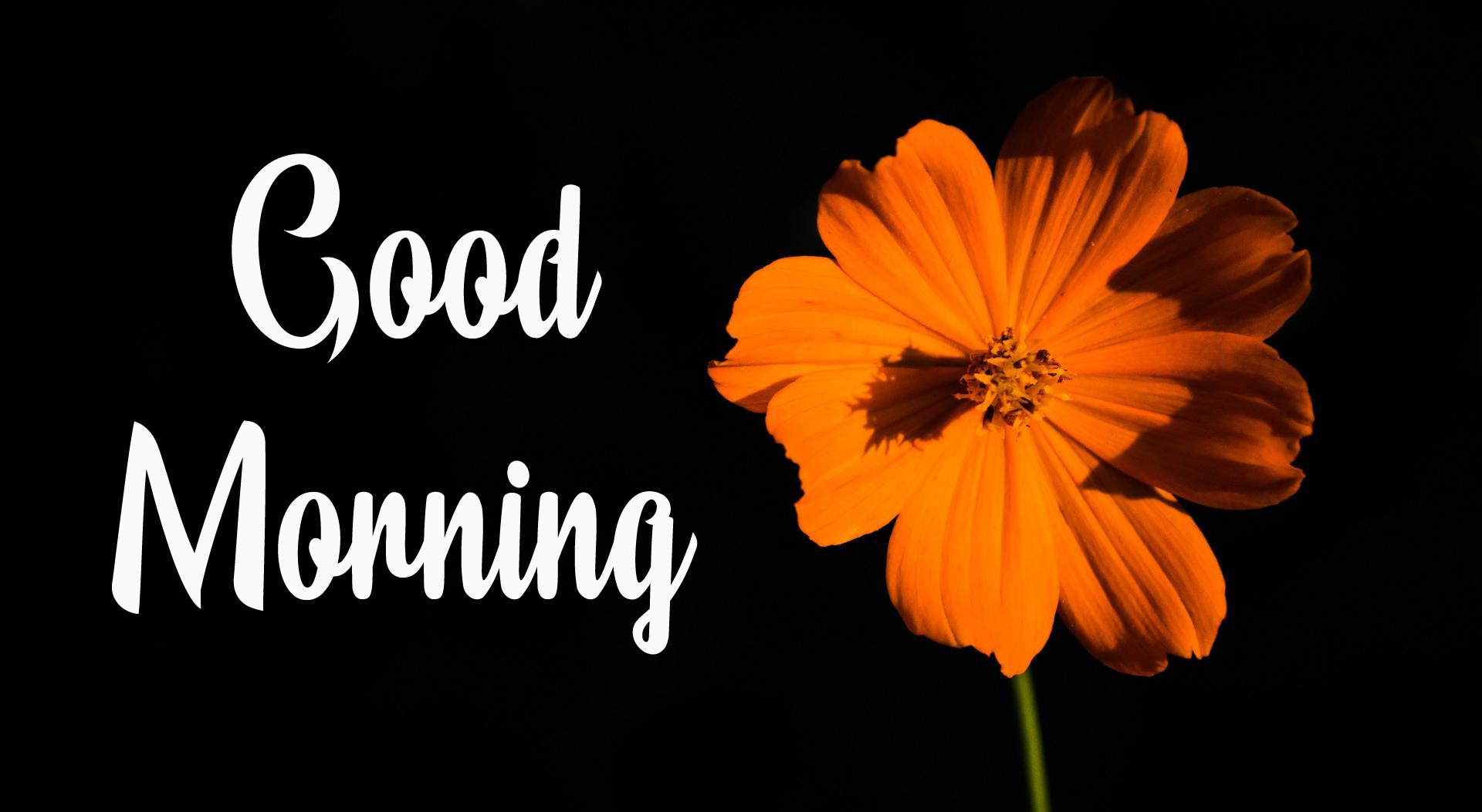 New Top 4k Good Morning Images HD Download