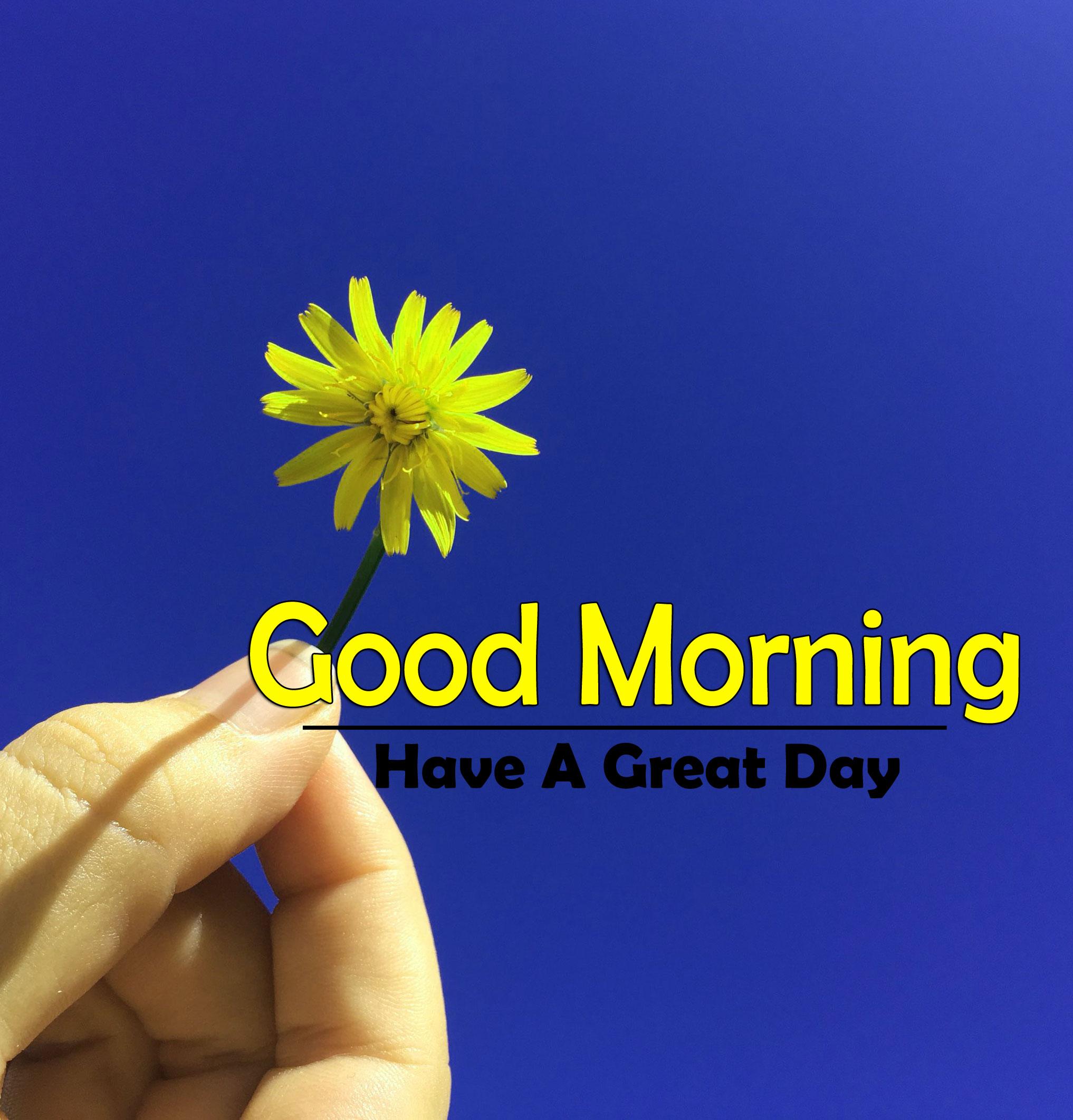 New Top Best Flower 4k Good Morning Images Download