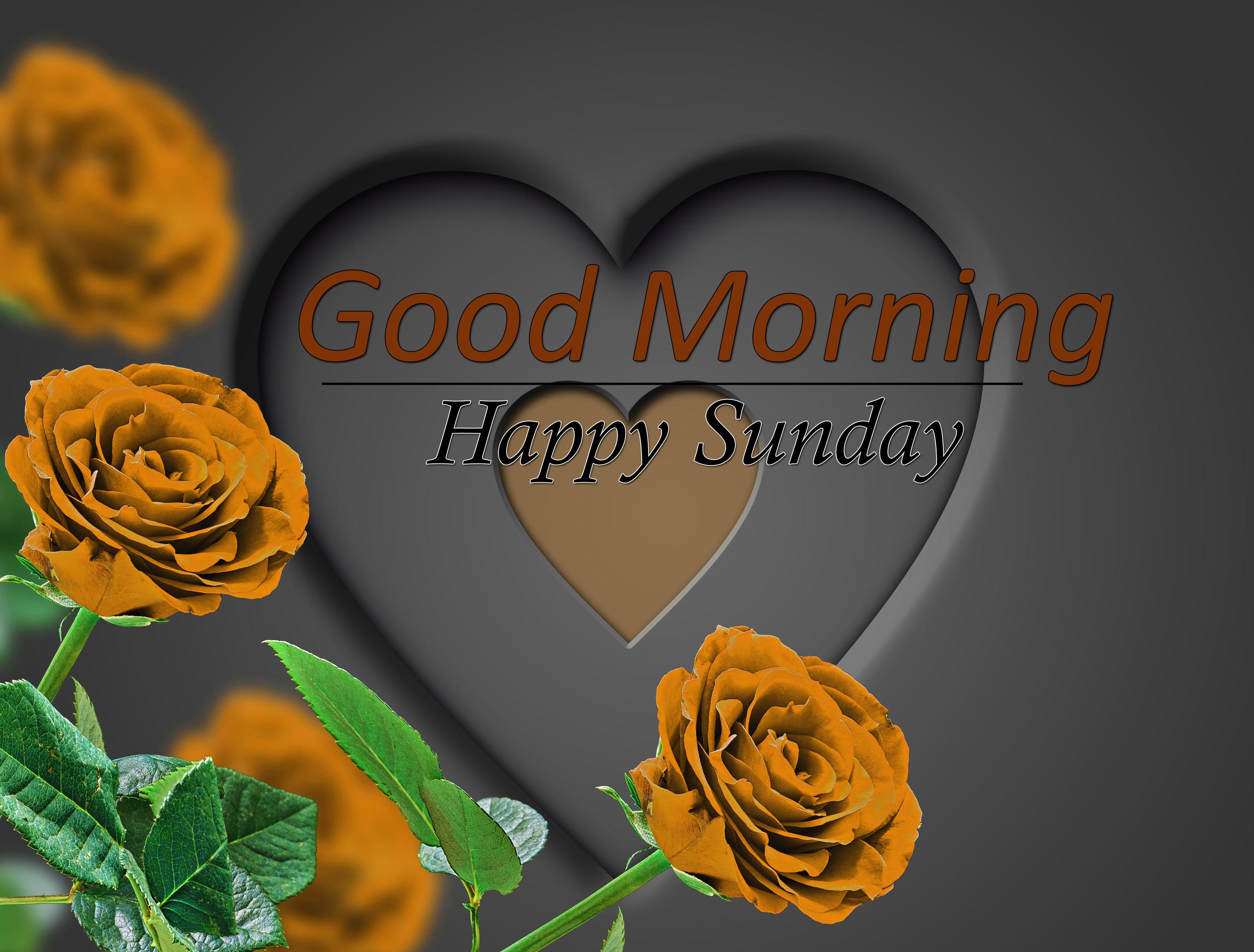 New Top Flower 4k Good Morning Images Download