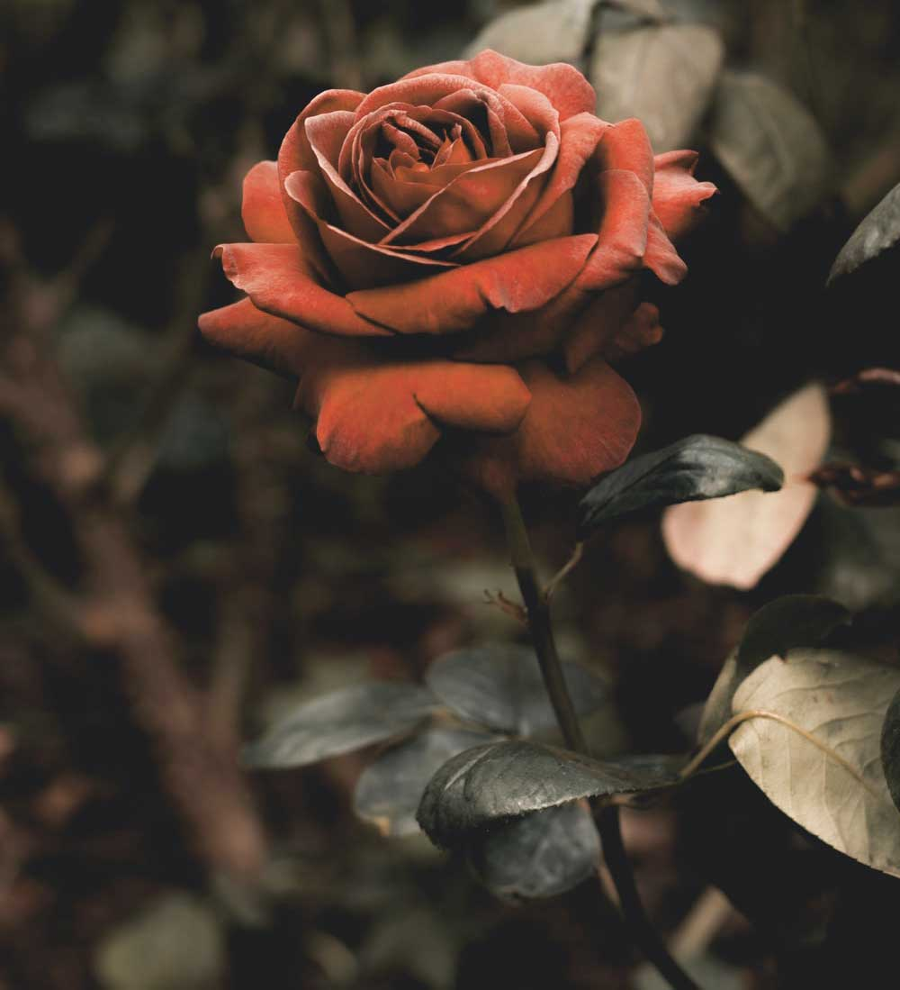Nice Flower For ProFile Photo Images