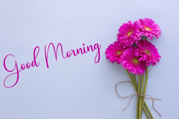 Pink Flower Good Morning Images Free