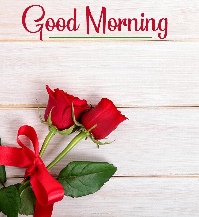 Red Rose 4k Good Morning Pics Free Download